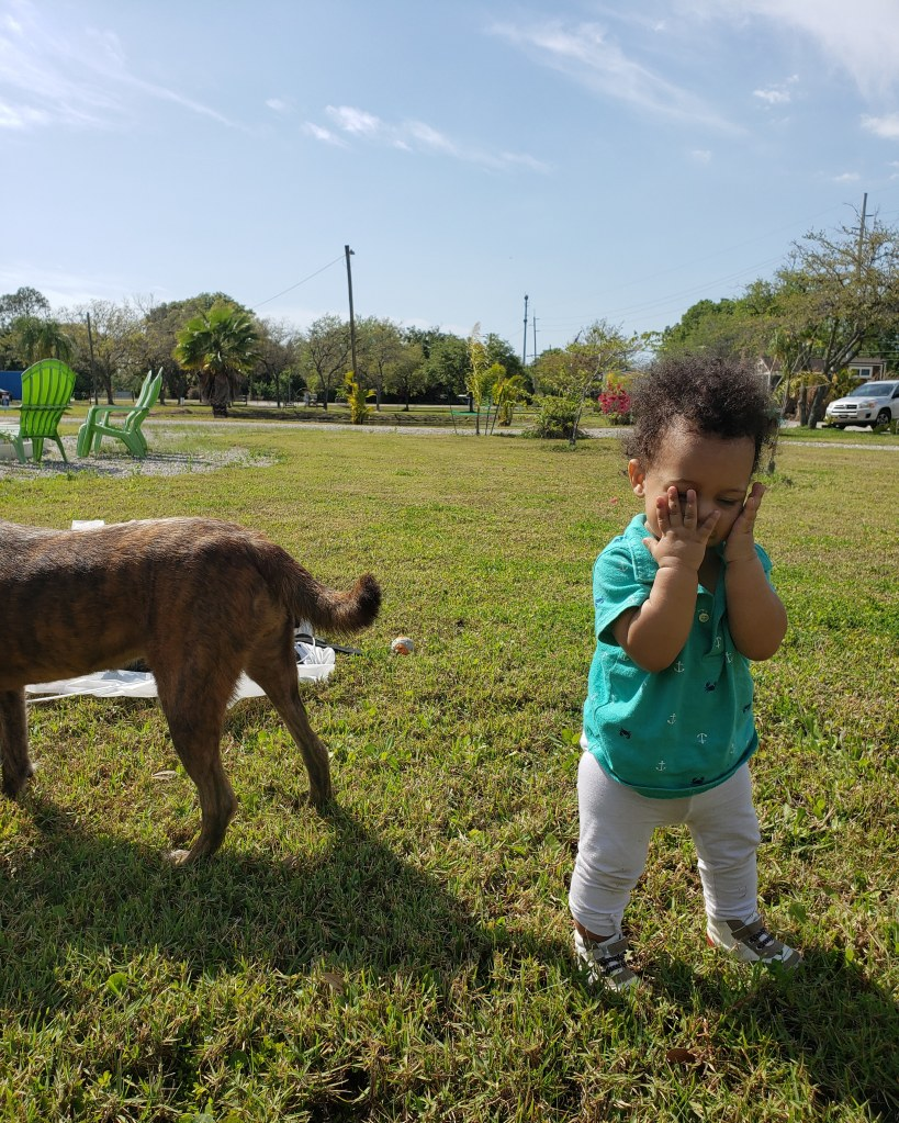 baby standing on green grass with brindle dog in picture